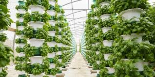 How Can Hydroponic Gardening Benefit Everyone?